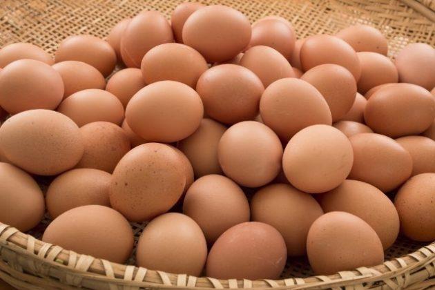 Resultado de imagem para fotos de ovos