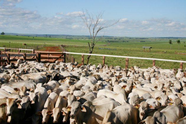 40e73c397 Sistema FAEP | Compra e venda de bovinos na Bolsa de Valores