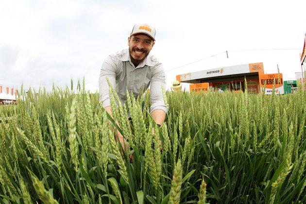 Jorge Stachoviack, gerente de novos negócios da Biotrigo Genética: segregação do trigo começa na seleção genética